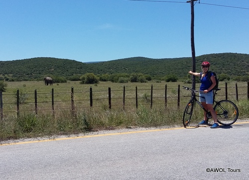 Cycling Garden Route Addo Elephant