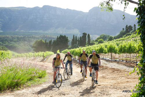 AWOL Winelands Constantia cycling tour