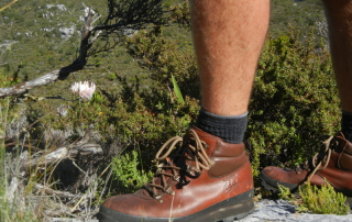 Safe hiking on Table Mountain AWOL Tours