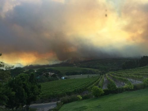 Fire over constantia winelands