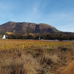 Groot Constantia Vineyards (1)