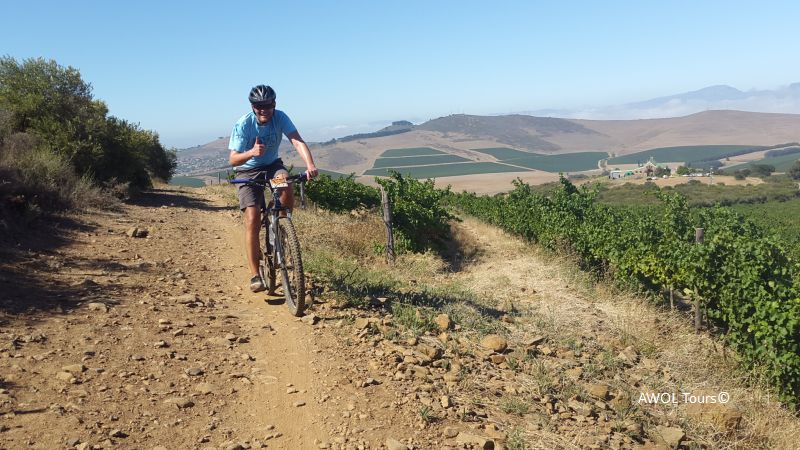 Mountain biking Durbanville Hillcrest vineyards